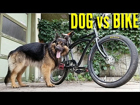 How To Ride Your Bike With A Dog