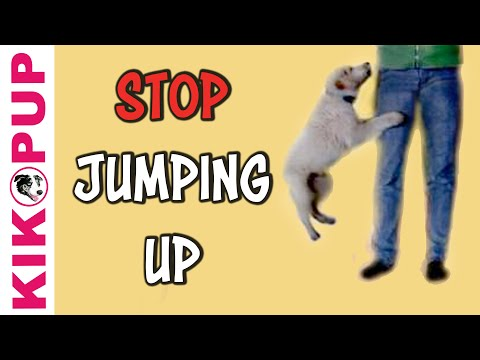 how to train a dog not to jump up