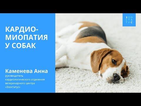Кардиомиопатия у собак (болезни сердца у собак)