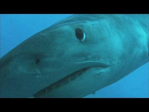 Penggemar Scuba Diving boleh cobain nih--kalau berani mati