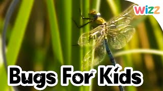 Dragonflies For Kids