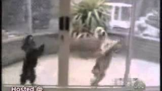 568980   Humor Funny Animal Super Spoof Collection
