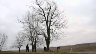Tree Of Heaven Removal - Emiquon