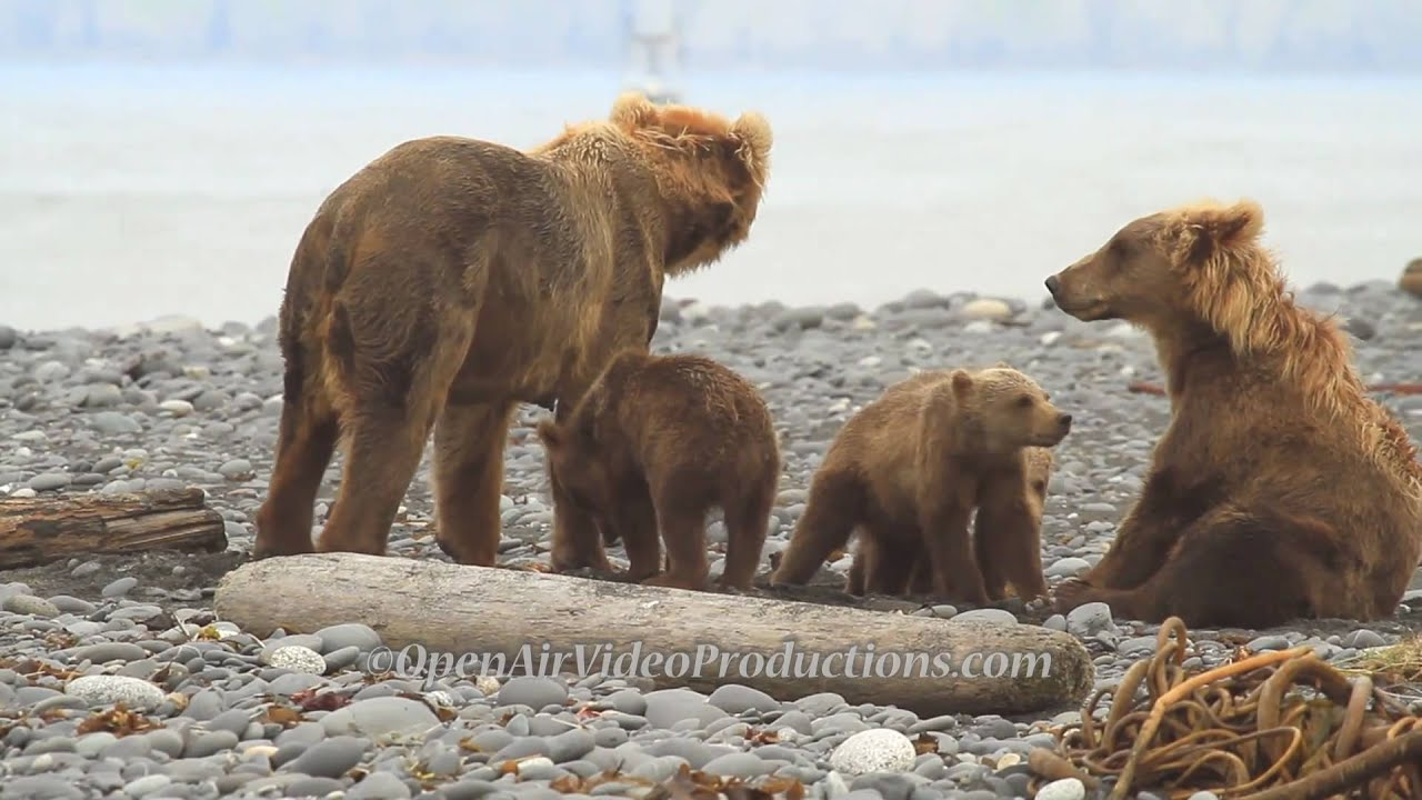 Alaska's Great Kodiak Bears