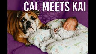 Baby Meets Bulldog Brother // CAL + KAI