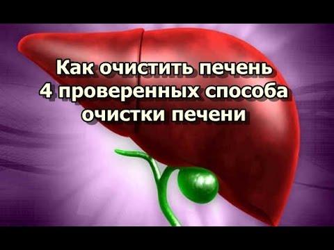 Печень анатомия кровообращение
