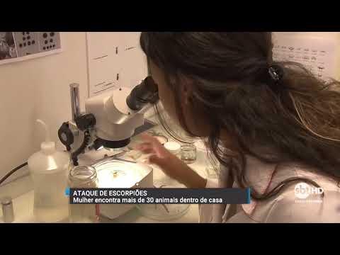Surto de escorpiões em Biguaçu