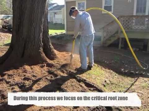 Aerating & De-Compacting Soil Around An Oak Tree Mp3