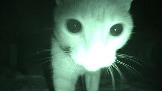 Смотреть онлайн Что делают коты ночью пока мы спим