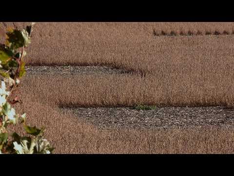 Crop Circles Found In Canada October 17, 2019 Strange Video