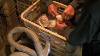 愛媛県西条市周桑産愛宕柿の焼酎とドライアイスを使った渋抜きJapanesePersimmon