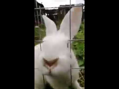 Зайци Бегают
