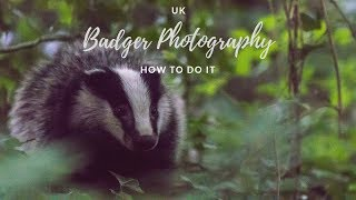 UK Badger Photography - HOW TO DO IT