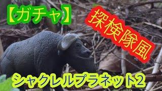 ガチャシャクレルプラネット2~探検隊風~シャクレルプラネット3もまもなく発売!売り切れ確実!?