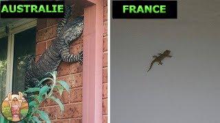 10 BONNES RAISONS DE NE PAS VISITER L' AUSTRALIE | Lama Faché