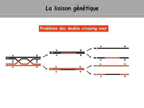 La préparation de lanalyse sur les entozoaires selon le sang