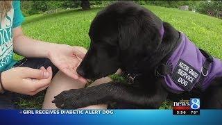 Diabetes alert dog smells blood sugar changes