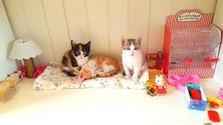 У НАС НОВЫЙ ДОМ для Котят Прямой Кефир КОШАЧЬЯ СЕМЬЯ СТРИМ Made a Lodge for Kittens  Николь и Алиса