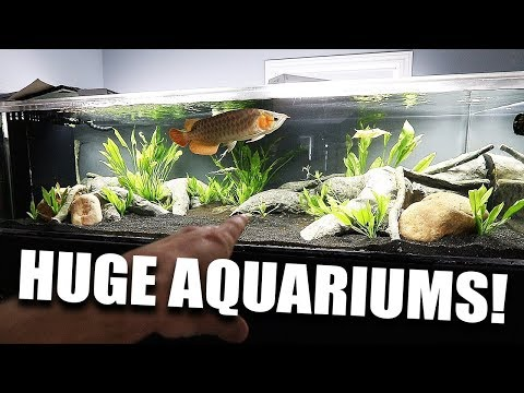 MY LARGEST AQUARIUMS!!