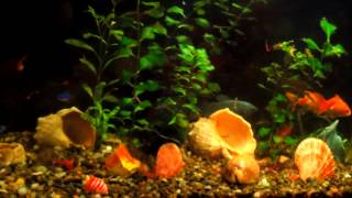 FISH IN MY AQUARIUM 1 (рыбки в моём аквариуме под Andre Fly - Inspiring Lounge Music 6) 1 HOUR