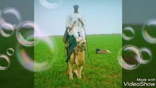 اغاني حصرية ود احمودي - الريد البدور اقتلني تحميل MP3