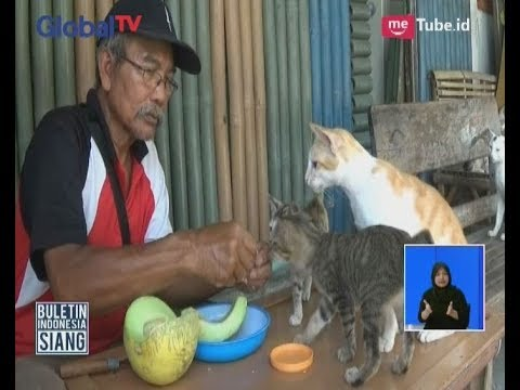 Unik!! Kucing Milik Seorang Kakek Warga Blitar ini Menyukai Buah Sebagai Makanannya - BIS 12/10