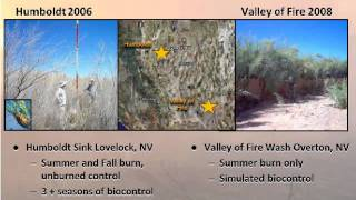 Tamarisk Invasion and Fire in Southwestern Desert Ecosystems