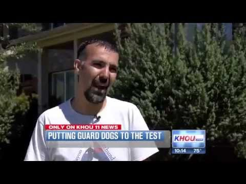 Testing Your Guard Dogs
