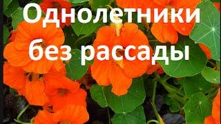 🍀🌻🌷 Цветы без рассады- однолетники - ландшафтный дизайн своими руками