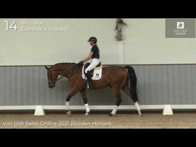 Nic Nac under saddle