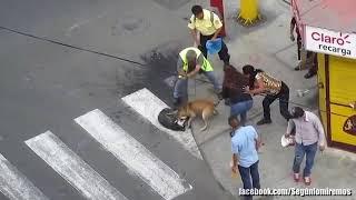Напала бойцовская собака страшно
