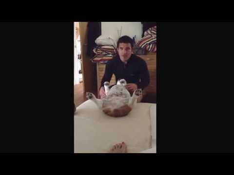 Ο σκύλος που κάνει τον… πεθαμένο για να μη σηκωθεί από το κρεβάτι
