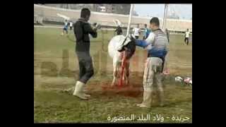 preview picture of video 'نادى المنصورة يذبح عجل لفك النحس'