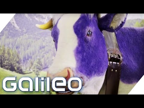 Milka - eine Erfolgsstory   Galileo   ProSieben