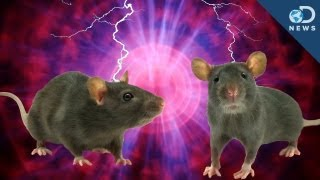 Rats Can Read Minds!