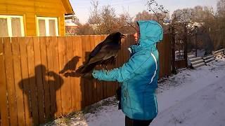 1. Говорящий ворон Вася / talking crow Vasya (speaks Russian).