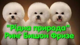 Выставка собак. Бишон фризе. Ридна природа. Dog show in Odessa. CAC-UA. Одесса. VLOG DOG. Болонка.