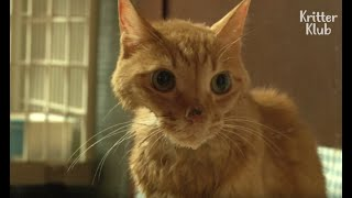 Cat With Depression Refuses To Eat (Part 1) | Animal in Crisis EP37