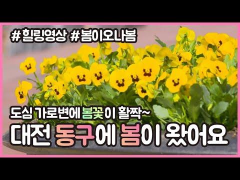 동구가 봄꽃으로 향긋~🌼🥰 양묘장에서 기른 꽃을 심었어요!