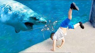 طفل القرش يذهب مطاردة  طفل مضحك في أحواض السمك ★ جمع مضحك