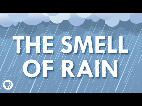 Kde se bere vůně deště?