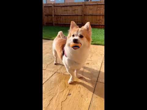 【抖音】寵物合集06-養狗心得
