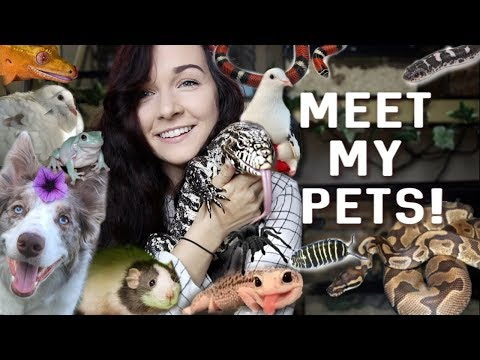 MEET ALL OF MY PETS (40+ ANIMALS) | 2019