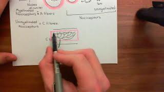 Local Anaesthetics Part 1