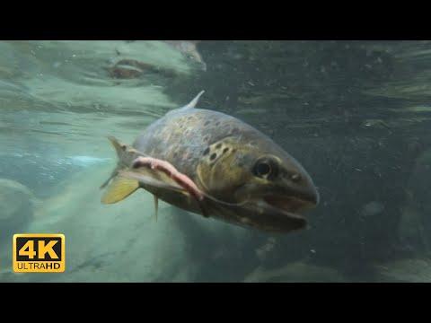 La pesca per saldare piselli