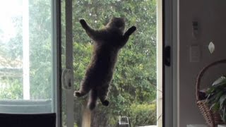 Cats mission - Cat jumps onto screen door for better view. Cassie