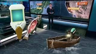 Канадские рыбаки выловили рыбу зараженную опасными химическими элементами