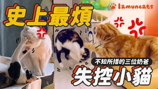 So annoying!! The kitten lost control┃LAMUNCATS ♧