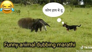 Funny Animal Dubbing Marathi video  Marathi Funny video 😂  Animal marathi comedy.