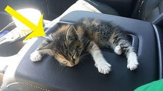 Truck Driver Rescues Kitten From The Road. After She Fell Asleep In The Truck, He Did Sweetest Thing
